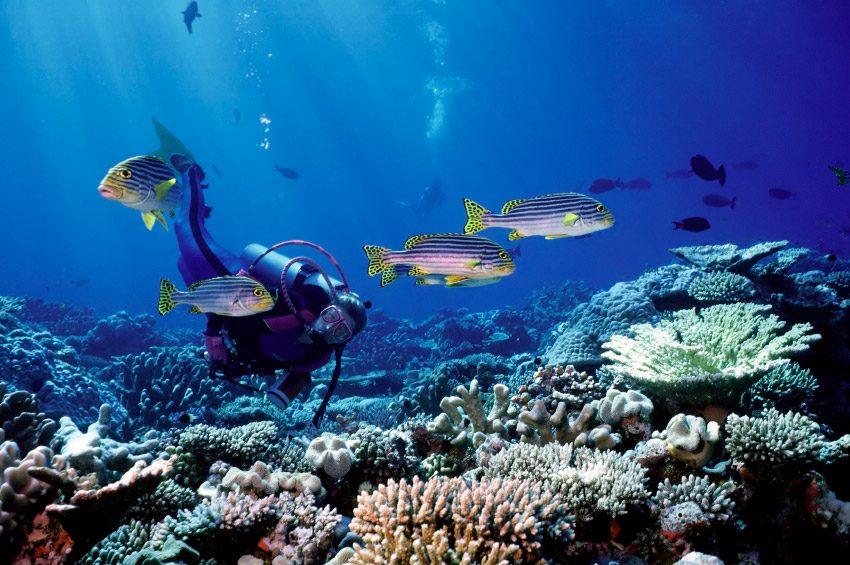 Buceo con peces tropicales im genes y fotos for Peces tropicales